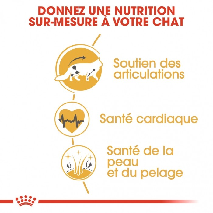 Alimentation pour chat - Royal Canin Maine Coon Adult pour chats