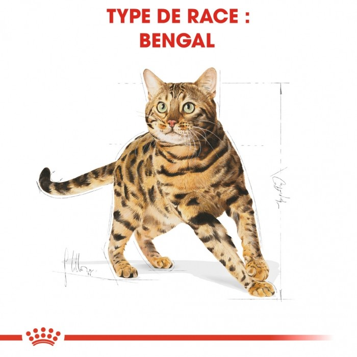 Alimentation pour chat - Royal Canin Bengal Adult pour chats