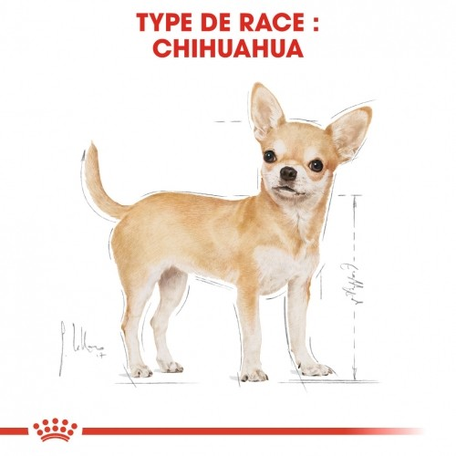 Alimentation pour chien - Royal Canin Chihuahua Adult pour chiens