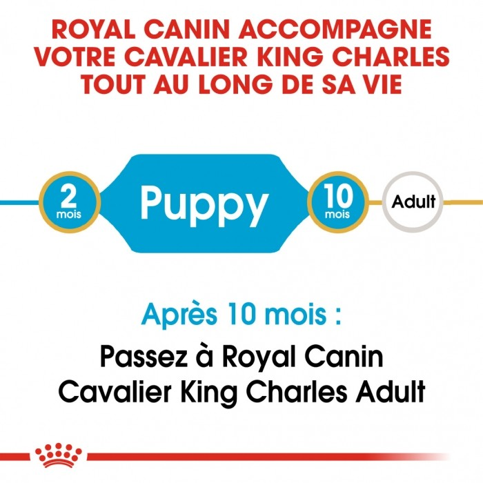 Alimentation pour chien - Royal Canin Cavalier King Charles Puppy pour chiens