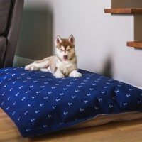 Coussin pour chien - Coussin Cloud Navy Be One Breed